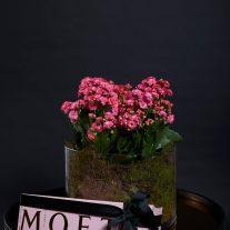 seasonal flower champ 207x207